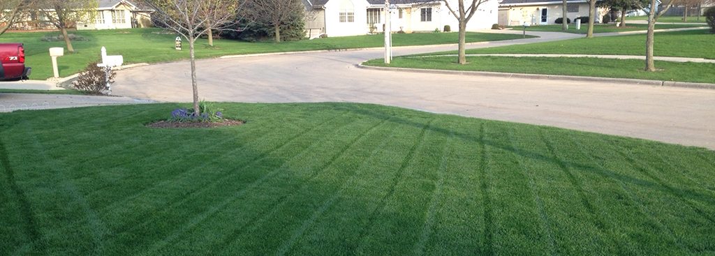 brooklawn_kentucky-bluegrass_turf-merchants