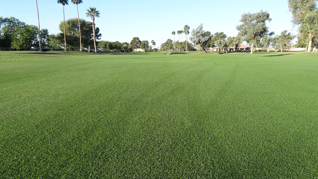 evening-shade_perennial-ryegrass_1_turf-merchants