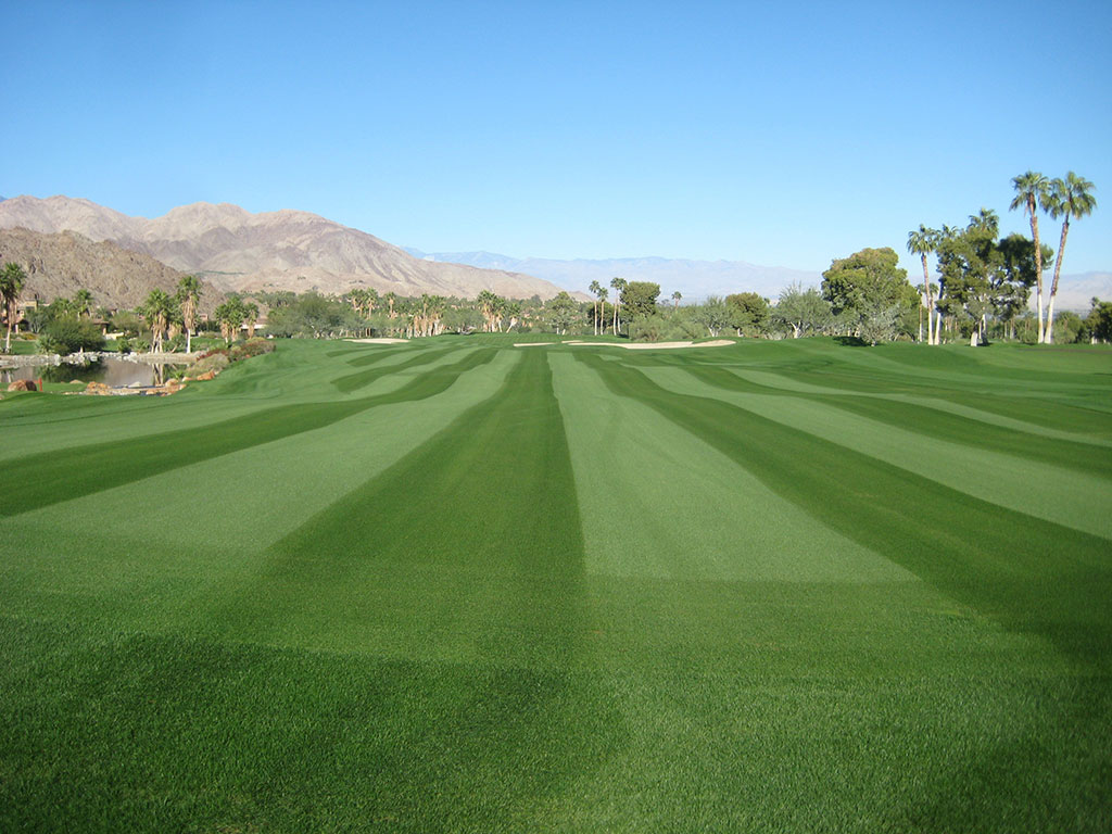 paragon-glr_perennial-ryegrass_turf-merchants-2