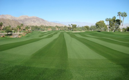 paragon-glr_perennial-ryegrass_turf-merchants