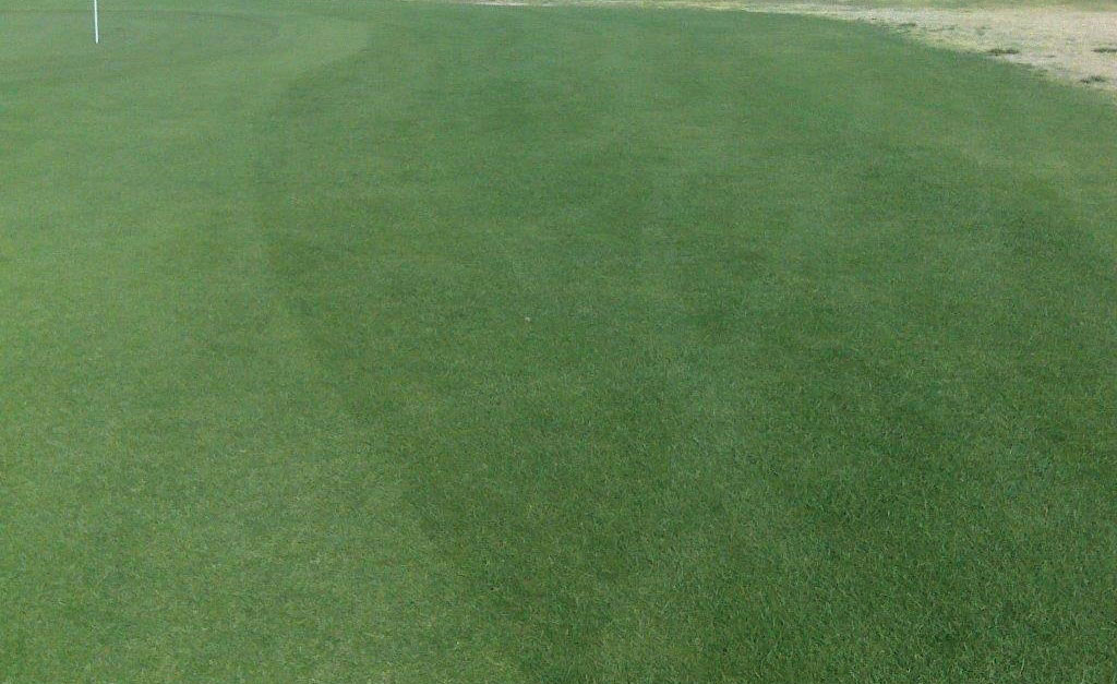 patriot-4_perennial-ryegrass_turf-merchants