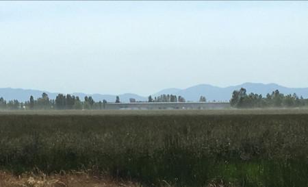 pollen-cloud_willamette-valley_turf-merchants