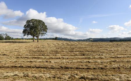 ryegrass-harvest_turf-merchants_r