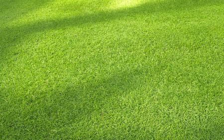 tall-fescue-turfgrass_turf-merchants