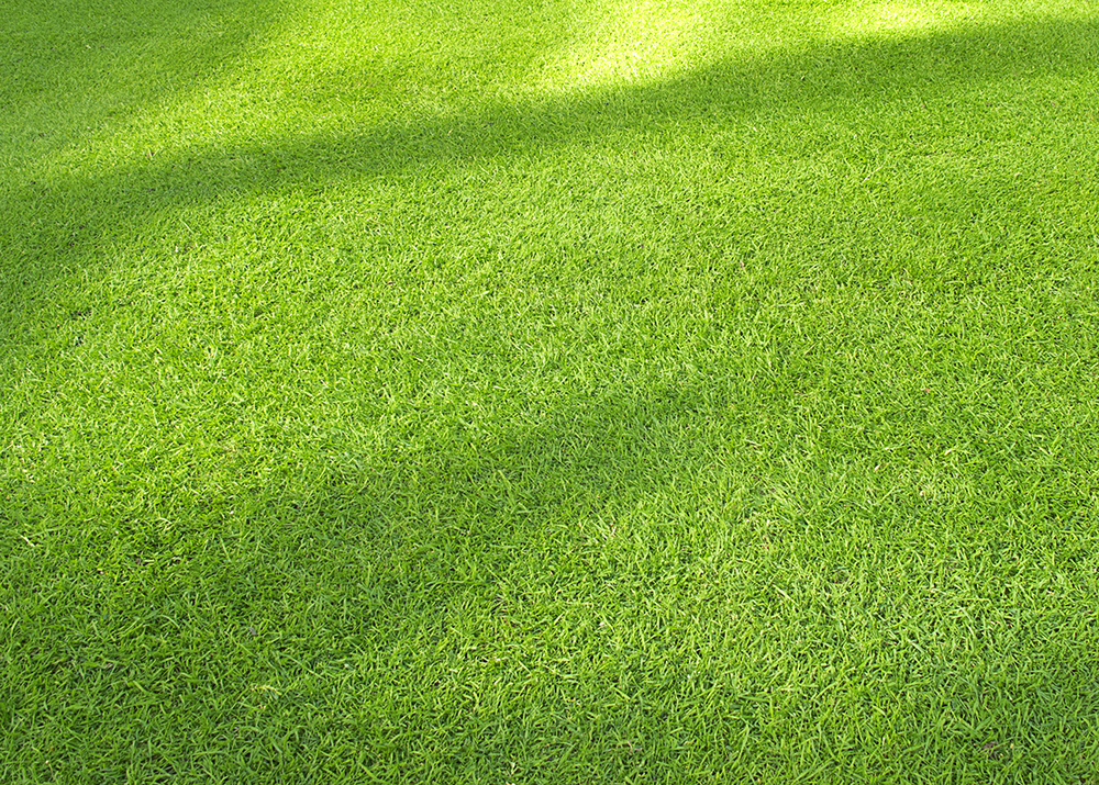 tall-fescue-turfgrass_turf-merchants