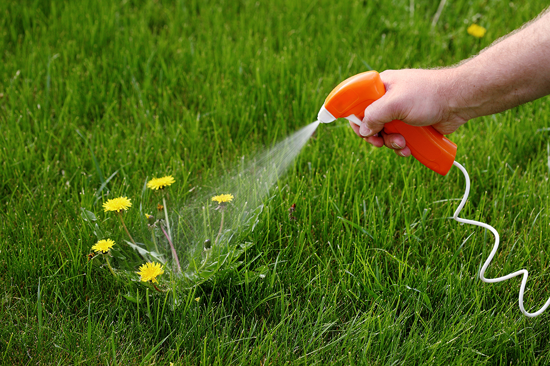 weed-control-spraying_turf-merchants