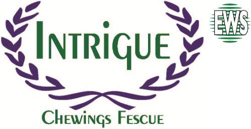 intrigue-ews-logo